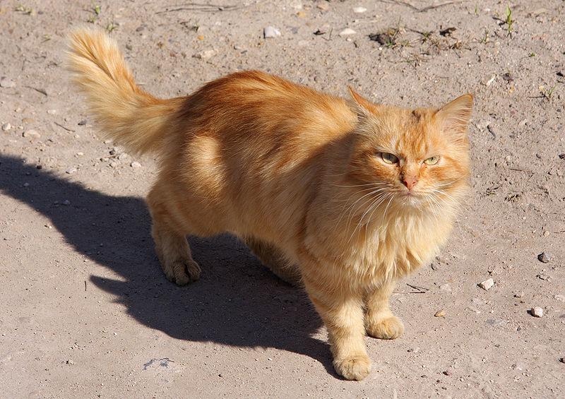 cat mayor stubbs