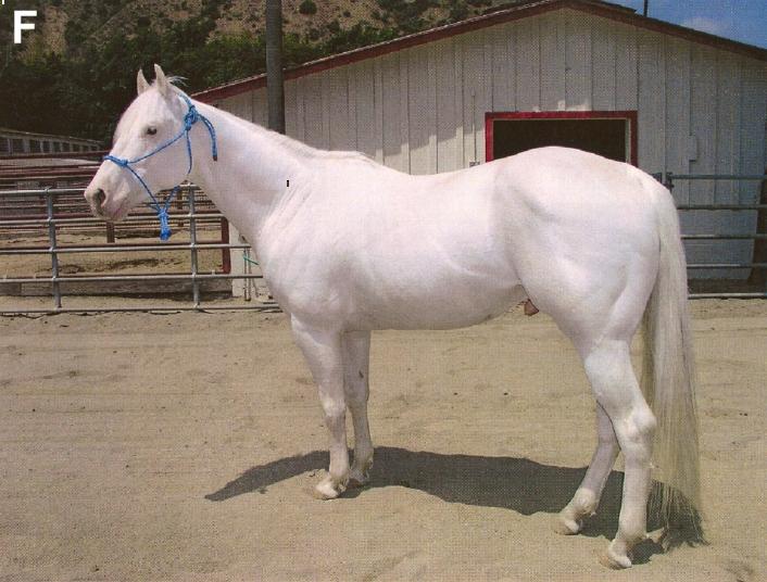 Dominant White Horse F | Color Genetics