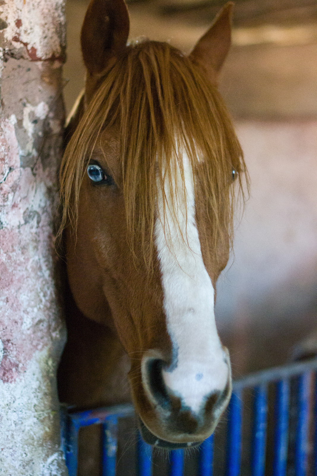 Lovely Blue Eye in Chestnut Horse | Color Genetics