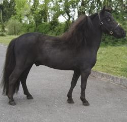 an example of minimal frame on a black horse