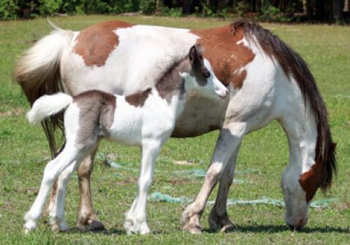 The Promise Walela and Her Colt