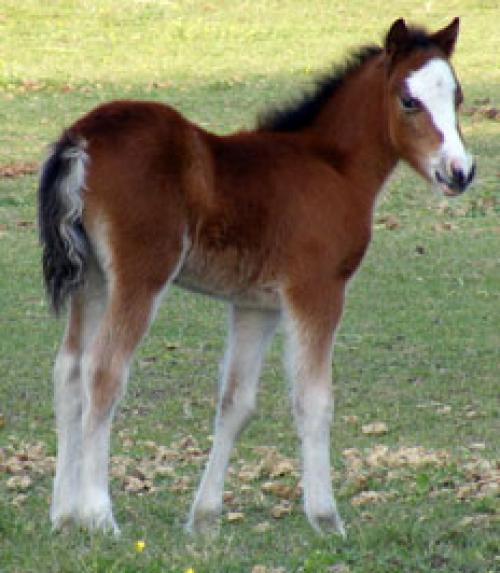 The Promise Bay Filly