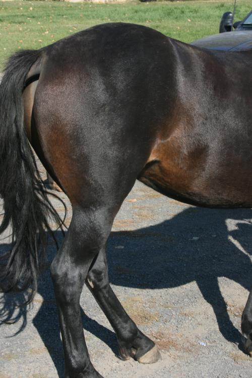 Brown in soft spots on a brown horse