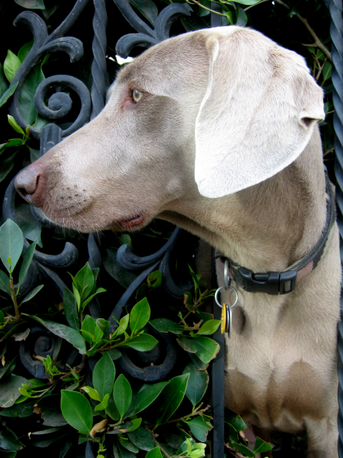 Dog with both Dilute and brown