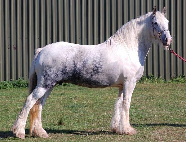 Vines Blue and White Mare