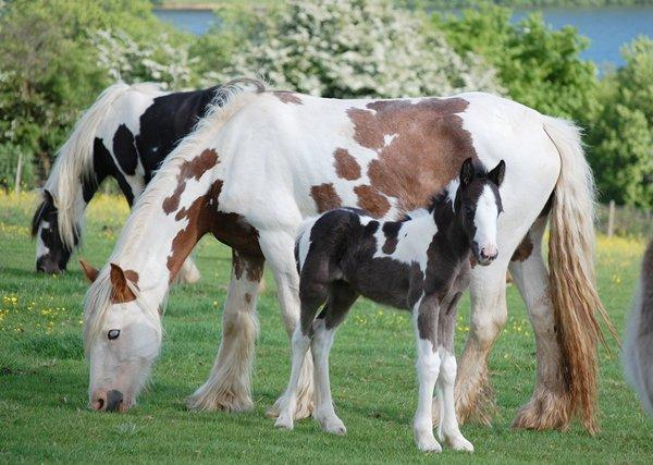 Vines Mare and Foal