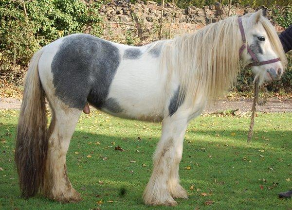 Vines Blue and White Gelding