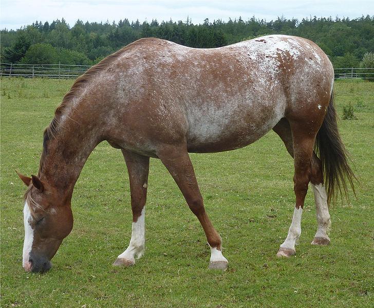 Lichtenwald Pferd