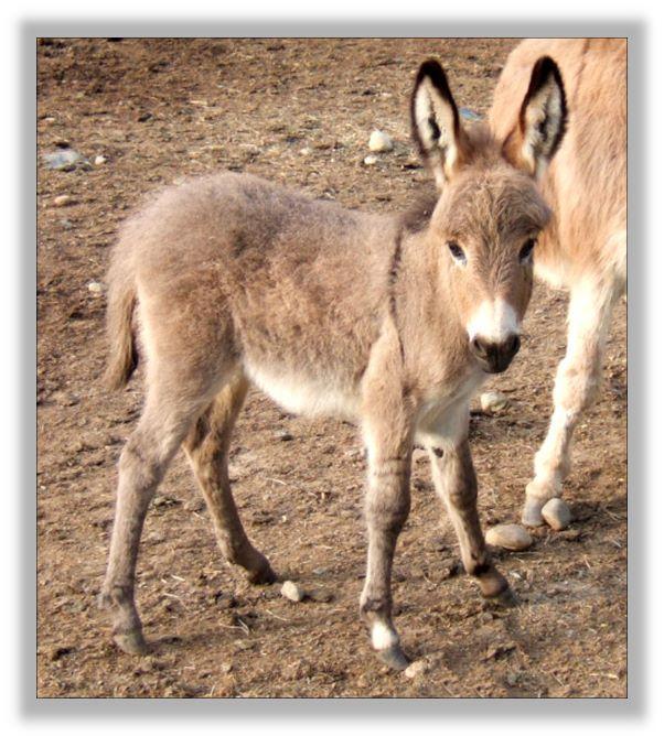 Merry-Go-Round's Bambi