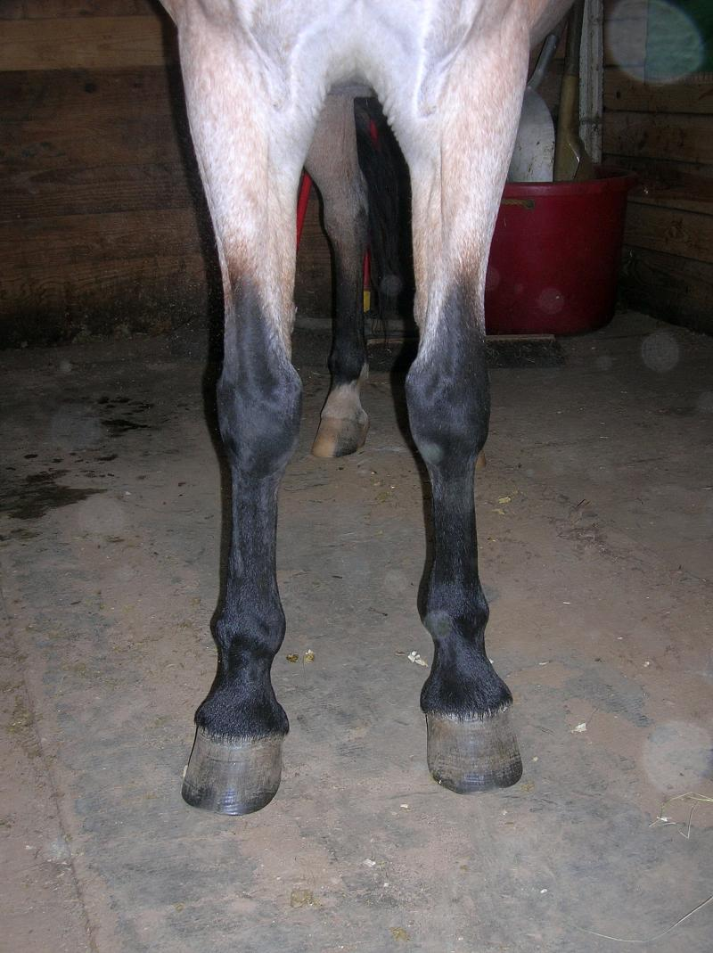 Bay Roan Legs