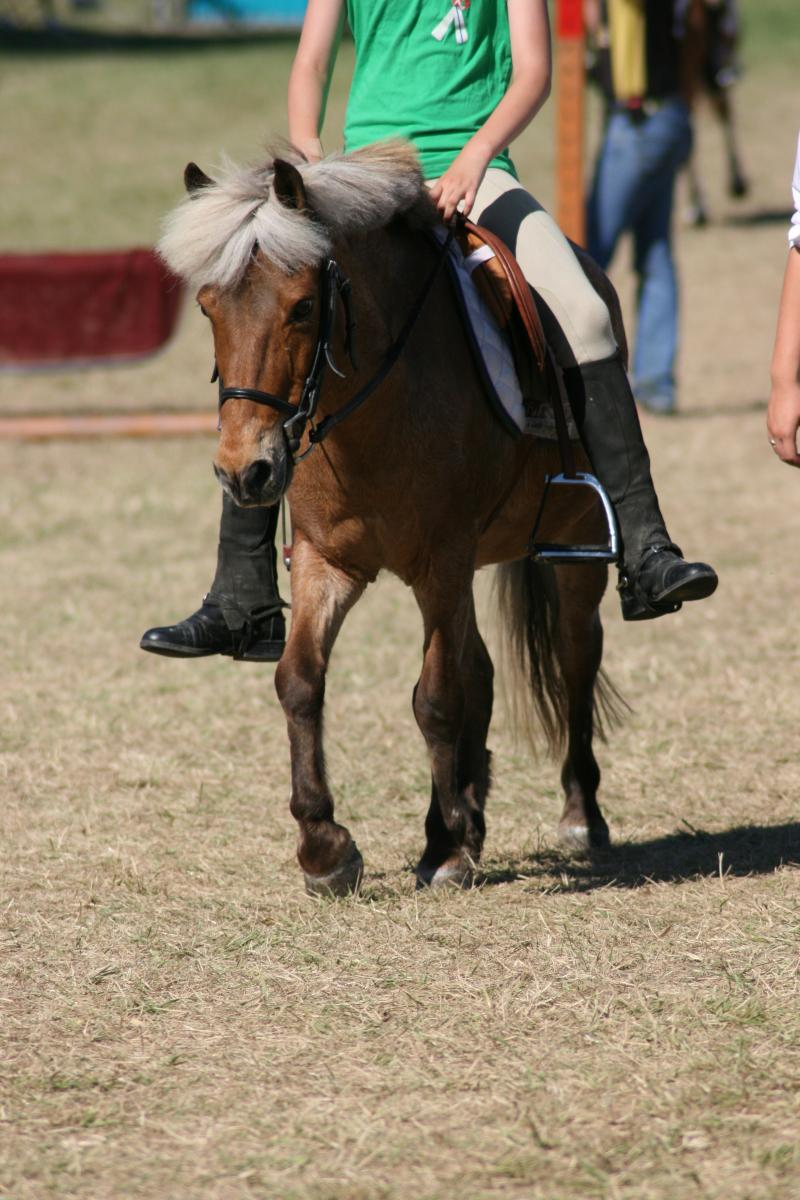 Silver bay pony