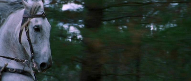Asfaloth Running