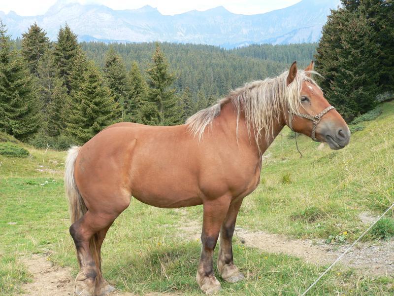 Horse Col des Saisies