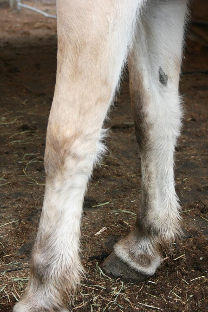 Fjord leg markings