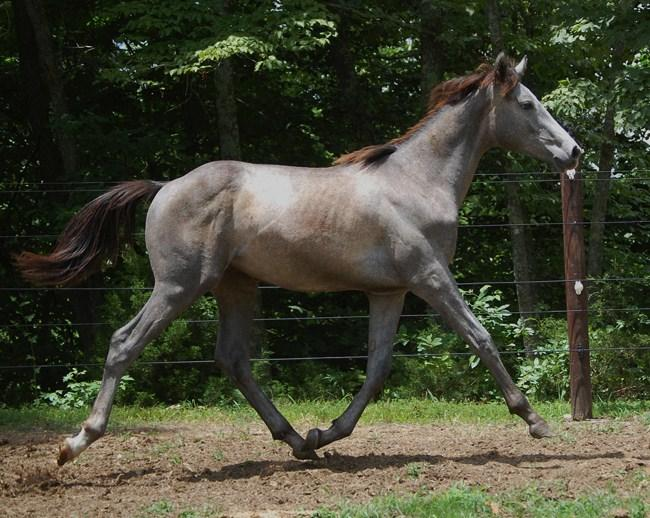 IronJet as a Yearling