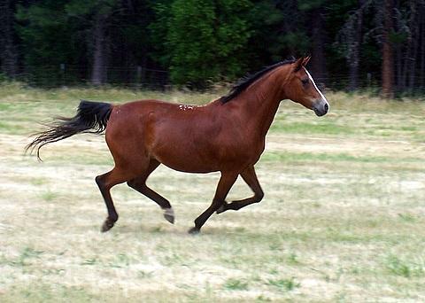 Maggie Running