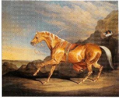 Mr. Alfred Bonar's Chestnut Arabian by J. Ward