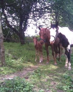 Patches, Maya, filly day 1