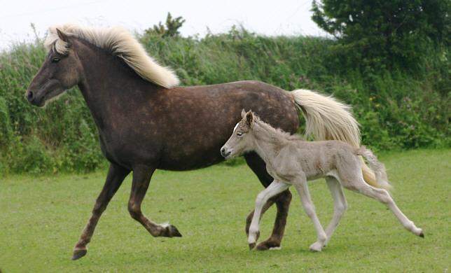 Silver Dapple Mare & Foal