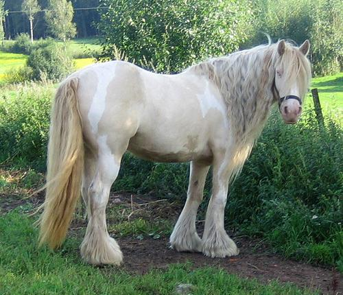 Smoky Cream Pinto Mare