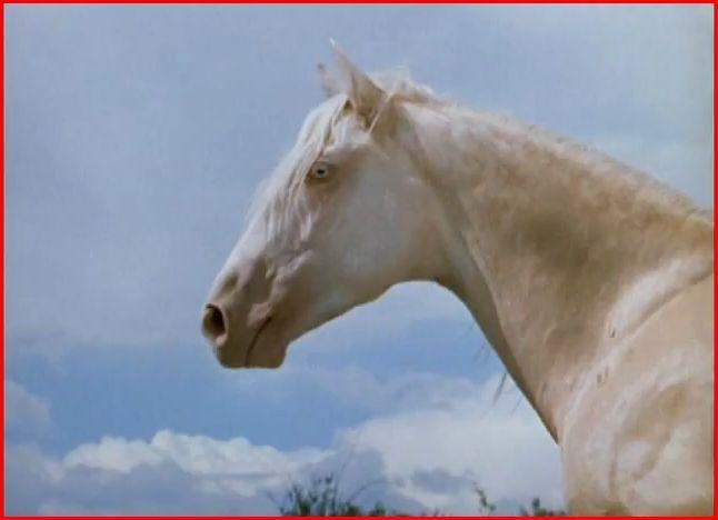 The Albino