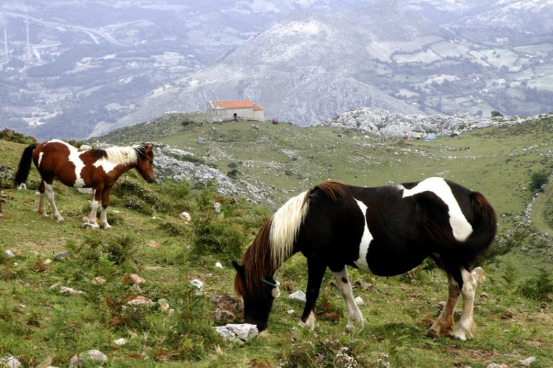 Tobiano Ponies