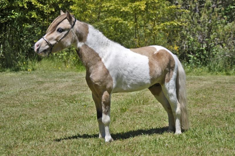 Cross Country Blue Moon
