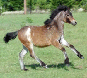 The Promise Bay Roan Filly
