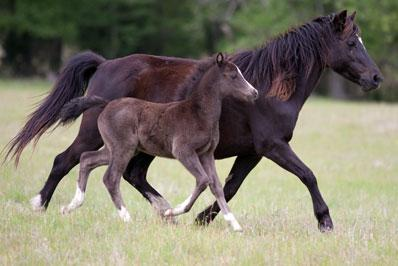 Tylwyth Bon Bon and Foal
