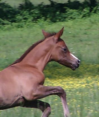 Ironstone One Week Canter