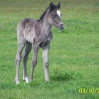 Foal Coat Color Photo Gallery