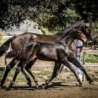 brown colt at inspection