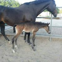 Brown colt Iverson at 1 day