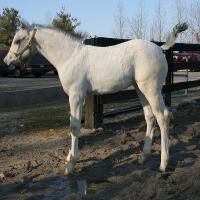 Few Spot Foal