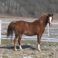horse with white markings