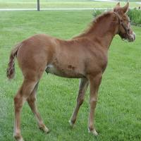Golden Champagne Filly