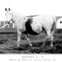 Mershed