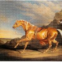 Mr. Alfred Bonar's Chestnut Arabian by J. Ward