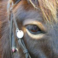 Light hair around the eye pangare (horse)