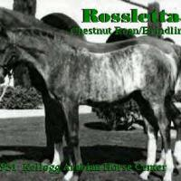 Rossletta