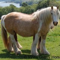 Vines Gypsy Palomino Mare (horse)