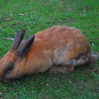 Black Tort Rabbit