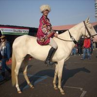 perlino Akhal teke horse