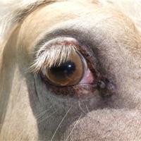 champange eye