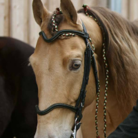 amber champagne horse