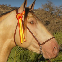 Green eye in a buckskin pearl horse