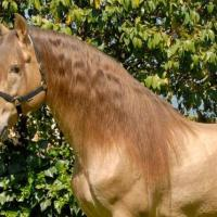 Equine Color Genetics Photo Gallery