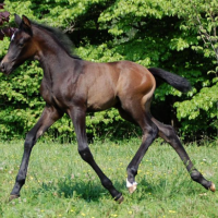 Brown or Black Foals Photo Gallery