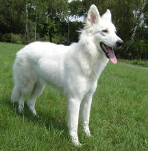 A white colored dog