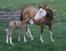 Splashed White Mare and Foal